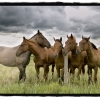 5 Horses at Fence