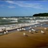 Lake Michigan Gulls