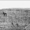 Ram in the Badlands